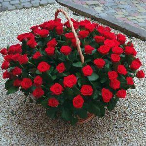 101 красная роза в корзине в Бердянске фото