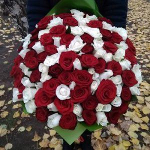 букет 101 красная и белая роза в Бердянске фото