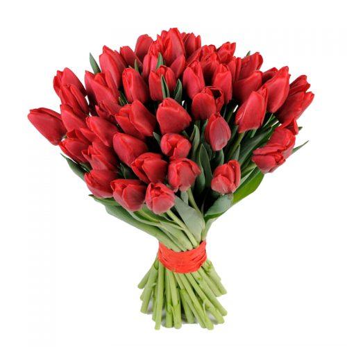 49 красных тюльпанов фото