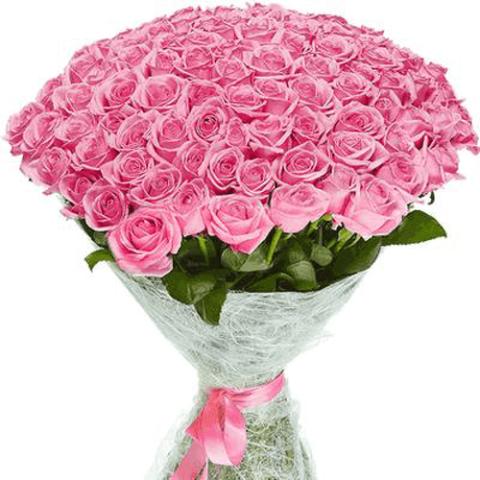 101 роза аква фото