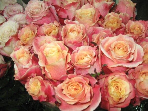 доставка цветов бердянск розы