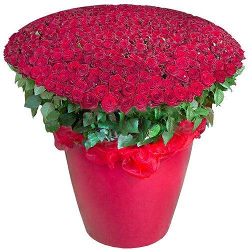 товар 301 красная роза в большом вазоне