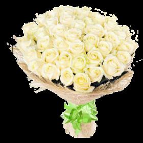 51 белая роза акция