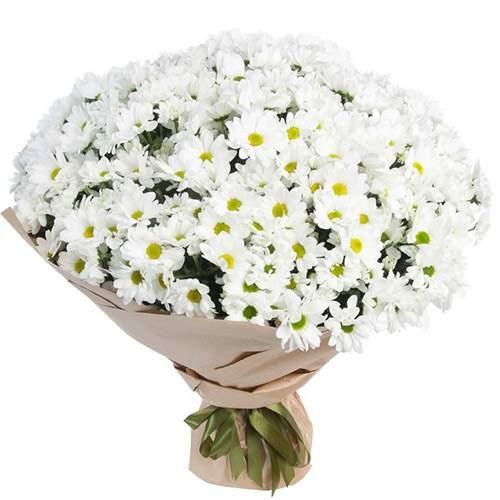 букет 51 ромашковая хризантема фото