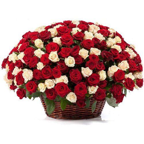 101 красная и белая роза в корзине фото