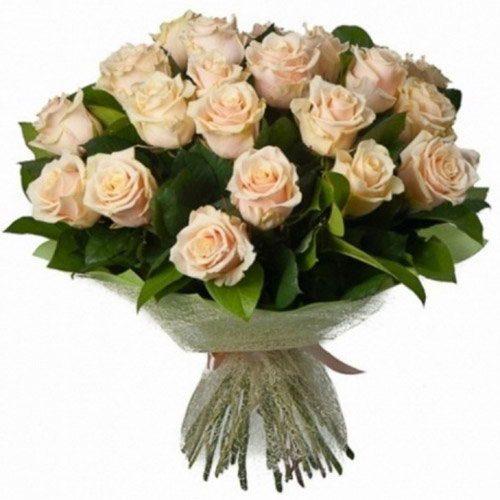 букет 33 кремовые розы