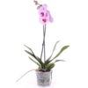 Орхидея фото товара