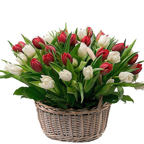 букет 51 тюльпан в корзине фото