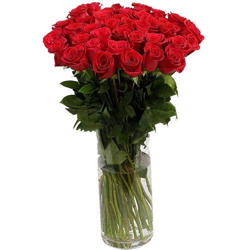Роза импортная красная фото