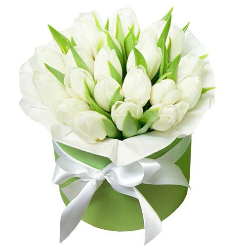 21 белый тюльпан в коробке фото