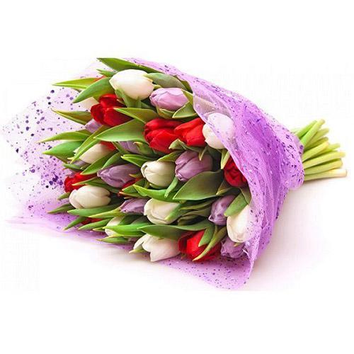 21 тюльпан ассорти (красный, белый, фиолетовый) фото