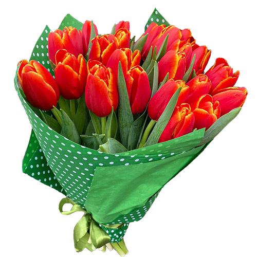 """21 тюльпан """"Маковый цвет"""" фото"""