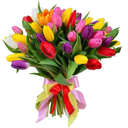 35 тюльпанов микс (красный, жёлтый, розовый, фиолетовый) фото