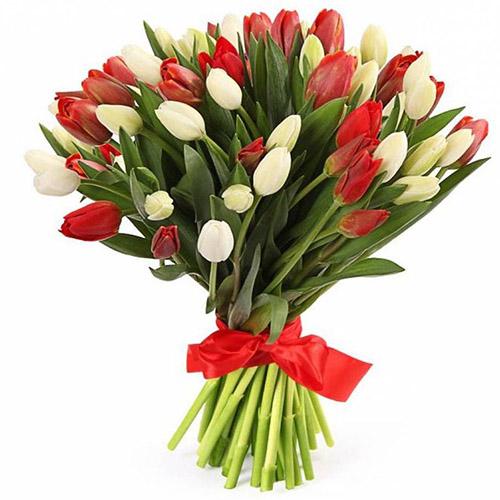 букет 51 красно-белый тюльпан (с лентой)