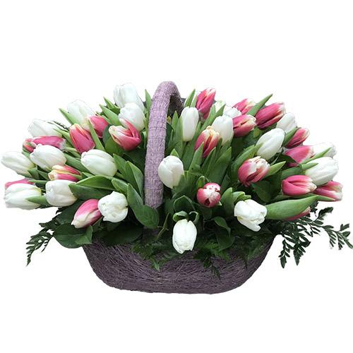 51 бело-розовый тюльпан в корзине фото