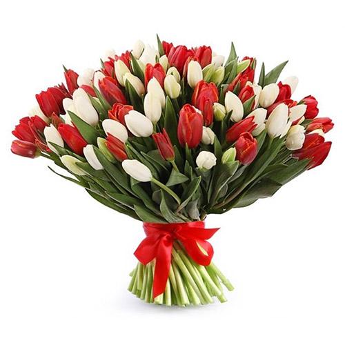 75 красно-белых тюльпанов (в ленте) фото