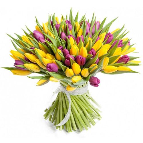 75 фиолетово-жёлтых тюльпанов фото