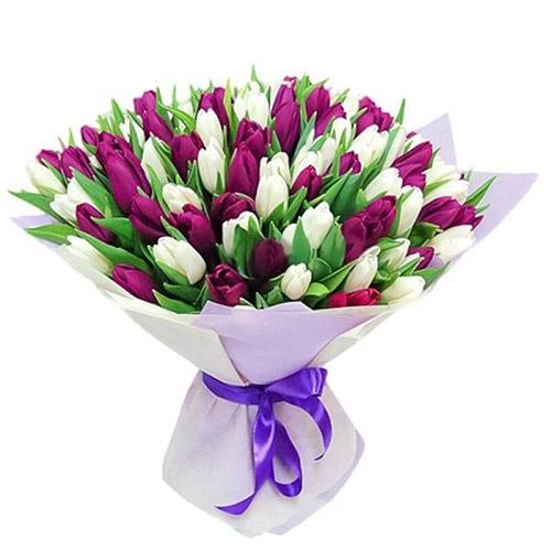 75 пурпурно-белых тюльпанов фото