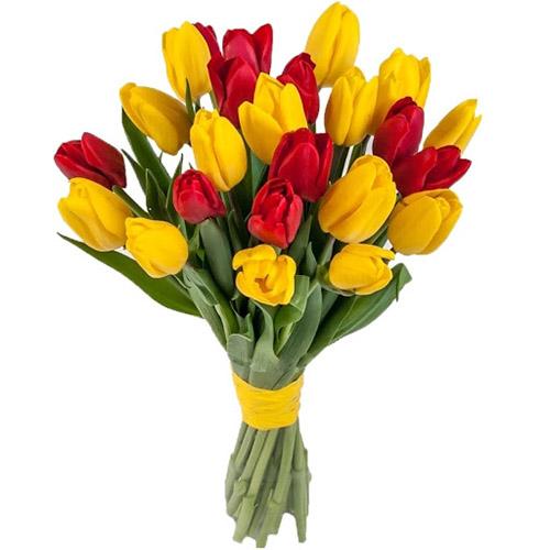 Фото товара 15 червоно-жовтих тюльпанів (зі стрічкою)