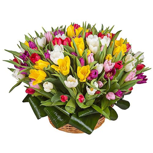 Фото товара 75 тюльпанів мікс (всі кольори) в кошику