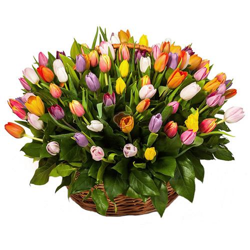 Фото товара 101 тюльпан асорті в кошику
