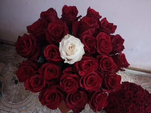 """Фото товара 21 троянда """"Неповторна"""" в коробці"""