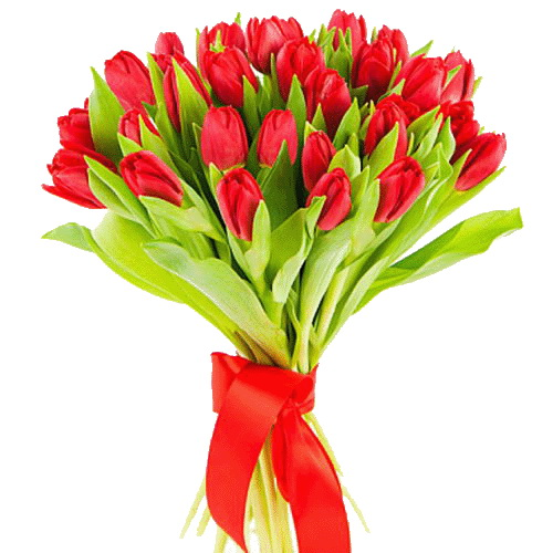 Фото товара 25 червоних тюльпанів