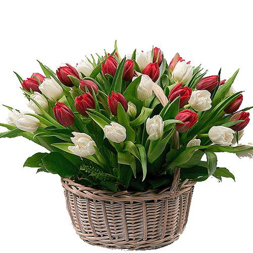 Фото товара 51 тюльпан у кошику