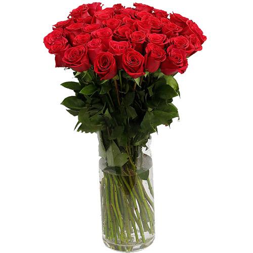 Фото товара Троянда імпортна червона (поштучно)