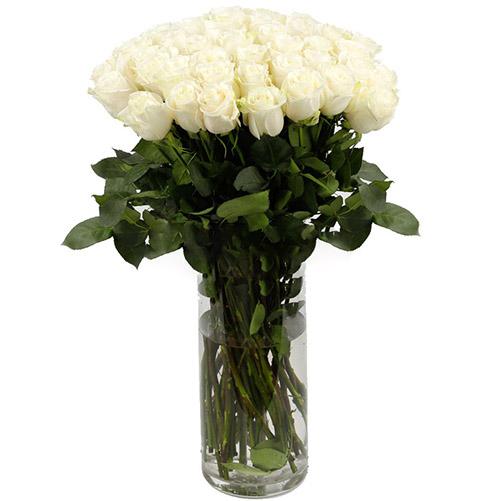 Фото товара Троянда імпортна біла (поштучно)